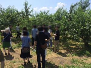 原田農園桃狩り/イメージ2